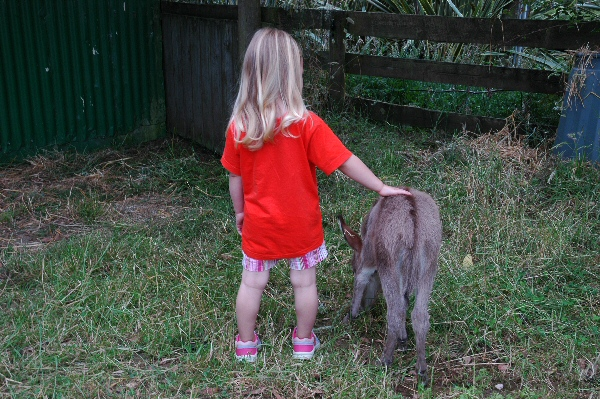Granddaughter Anouk with foal.