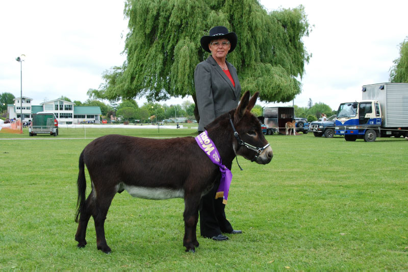 Nestle, Waikato World Champion at his 1st show in NZ