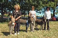 Three prize winning Clovercrest Miniatures with their owners at the Pukekohe A&P Show