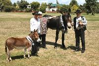 Cyders Spartacus young stock Champion and Reserve Supreme Champion Breed Donkey  at N.I. Show 2006.