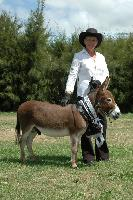 Cyders Spartacus, Young Stock Champion and Reserve Supreme Champion Breed Donkey N.I. Show 2006, judged by Jo-Anne Kokas, Australia