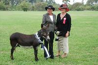 Nestle, Supreme Champion NI Show 2011 out of a field of 28 donkeys.